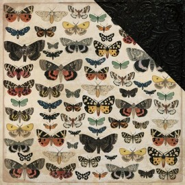 7 KaiserCraft Anthology Collection Entomology